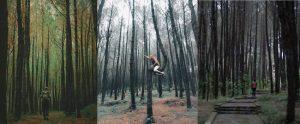 Tempat Wisata Hutan Pinus Kayon Semarang